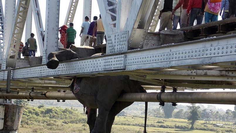 FAUCHÉS. Des passants circulent au-dessus de la carcasse suspendue d'un éléphant sur le pont d'une voie ferrée dans le district de Jalpaiguri, dans l'est de l'Inde. Au total, au moins sept pachydermes ont été tués lorsqu'un train les a heurtés à grande vitesse. Le trafic ferroviaire a été stoppé pendant plusieurs heures.