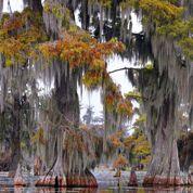 Tim Gautreaux: dans les forêts de Louisiane