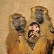 Zoo de Vincennes : chouchous et mal-aimés à parrainer