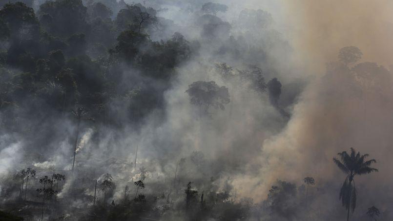 Tous les jours, des centaines d'hectares de forêt sont brûlés illégalement pour dégager des terrains destinés à l'agriculture intensive.