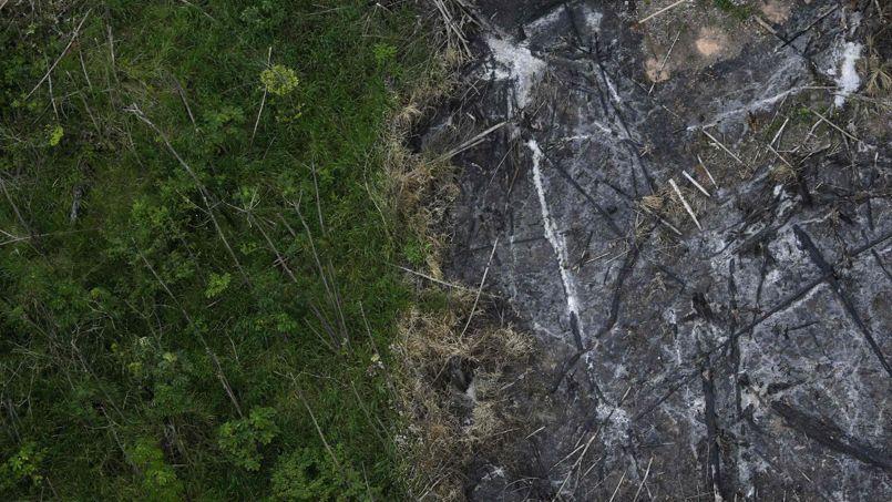 Vue d'un hélicoptère de la police brésilienne, cette zone protégée de la forêt amazonienne a totalement été détruite par des coupes illégales faites par des scieries travaillant dans la région.