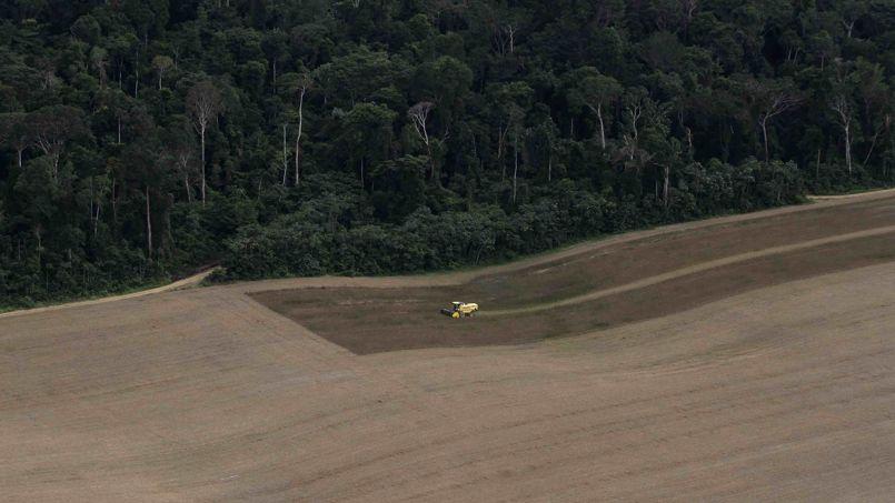 Une grande majorité des coupes sauvages dela forêt humide d'Amazonie est destinée à l'agriculture. Le Brésil est l'un des principaux producteurs de soja avec plus de 89 millions de tonnes produites en 2013.