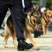 TVA: les éleveurs de chiens et chats descendent dans la rue