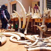 Trafic d'espèces: la lutte s'organise