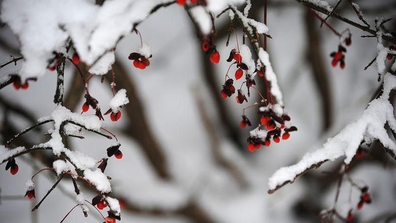 Ne vous laissez pas surprendre par le froid, prenez les devants en mettant dès maintenant les plantes les moins résistantes à l'abri.