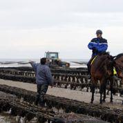 Dans la Manche, les huîtres sous surveillance de la garde républicaine
