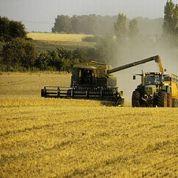 Le blé français profite des commandes égyptiennes