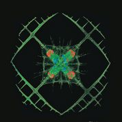 Le plancton, invisible mais essentiel à la survie de la Terre
