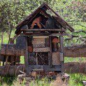 Au jardin ce week-end: installez un «hôtel à insectes»