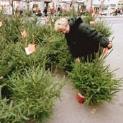 Le sapin de Noël se vend toujours bien malgré la crise