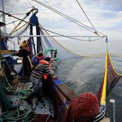 Accord à Bruxelles sur les quotas de pêche