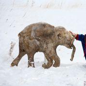 Le Bestiaire de l'âge de glace