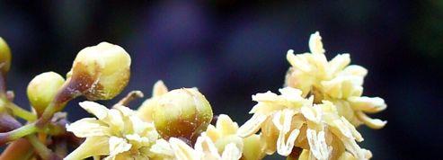 La plus ancienne plante à fleur dévoile ses secrets