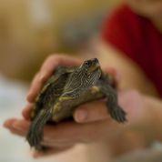 Les reptiles peuvent contaminer les enfants