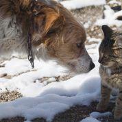 Chiens et chats: 2014, l'année des «J»