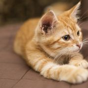 Comment vivre avec son chat en appartement ?