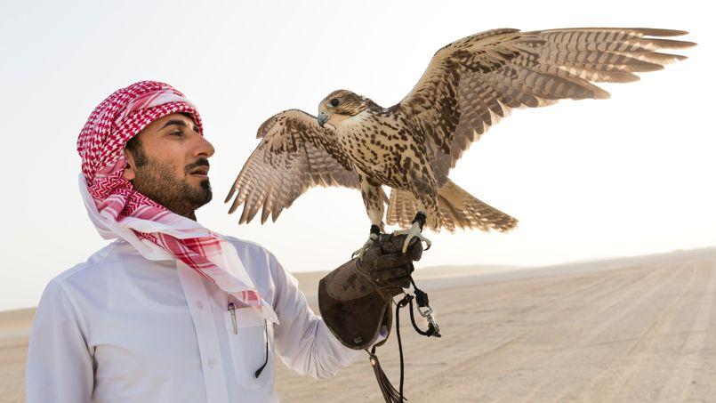 Le désert offre des rencontres plus silencieuses, c'est ici que s'entraînent les fauconniers, un art ancestral devenu un sport et un spectacle captivant.