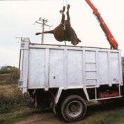 La seconde vie économique des animaux morts