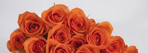 À la Saint-Valentin, les roses de contrefaçon affluent dans les rayons