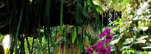 Le Jardin des Plantes célèbre les orchidées