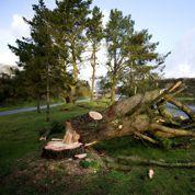 Tempête : 30.000 foyers restent privés d'électricité en Bretagne