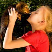 Chiot et chatons : un nouveau recours lors de l'acquisition