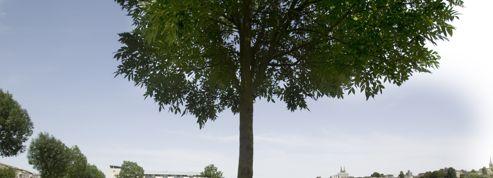 Plus verte la ville, le palmarès des cités les plus «green» de France
