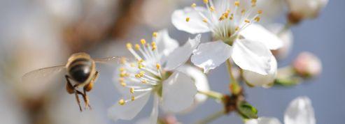 Un label «Bee friendly» pour sauver les abeilles