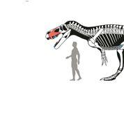 Découverte du plus grand dinosaure prédateur d'Europe