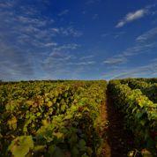 Christian Martray: «Les femmes savent faire des vins justes»