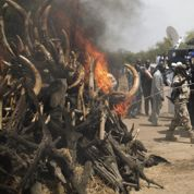 Tchad : une tonne d'ivoire détruite dans le parc de Zakouma
