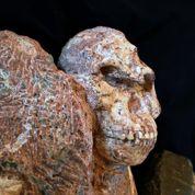 L'australopithèque sud-africain qui veut détrôner Lucy