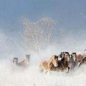 Les hordes sauvages de Gengis Khan