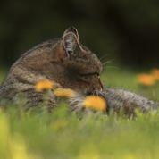 Chiens et chats: avec le printemps, la mue revient