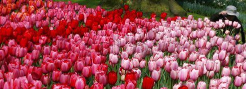Aux Pays-Bas, les Jardins de l'Europe sont en fleurs