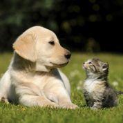Chiens et chats: les précautions avant des vacances dans le sud
