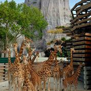 Parc zoologique : «L'animal ne s'exhibe plus pour les visiteurs»