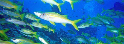 L'acidité de l'eau déboussole les poissons