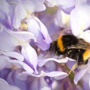 Semez des fleurs pour les abeilles au printemps