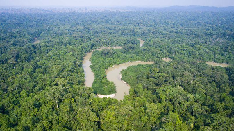 La biodiversité reste élevée sur Terre