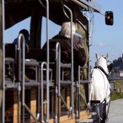 Des bus, des trains et des… chevaux pour le géant Transdev