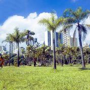 São Paulo : rendez-vous avec la démesure