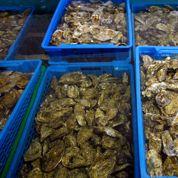 Arcachon : interdiction de consommer une partie des huîtres, moules et coques