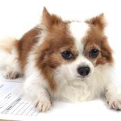 Bien choisir l'assurance santé de son chien ou chat