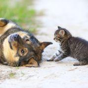 Chiens et chats: halte aux idées reçues!