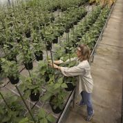 Dans le monde rêvé de Monsanto