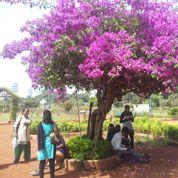 Ballade dans les «jardins suspendus» de Bombay