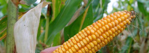 Deux bonnes nouvelles pour les anti-OGM