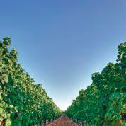 Le foncier agricole français séduit les investisseurs étrangers