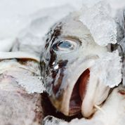 Le cabillaud dépasse le saumon dans l'assiette des Français
